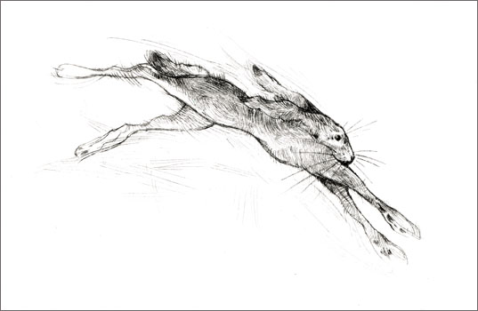 Lepus Leap Etching
